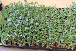 happy seedlings