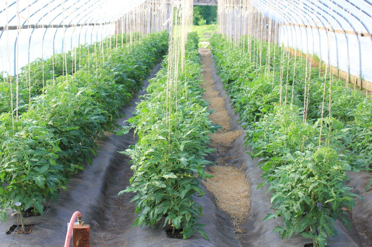 Farmer Bill's Blog – Harvest Hill Farm